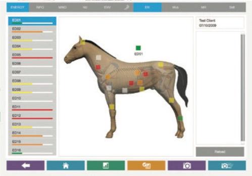 4.1_horse.jpg