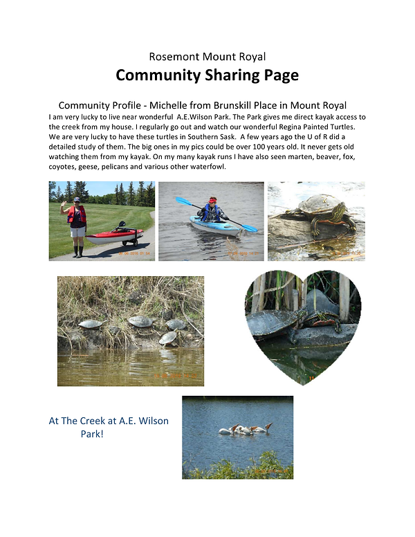 Community Sharing Page AE Wilson turtles