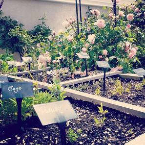 In mummy's beautiful edible garden.jpg
