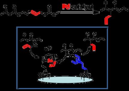 Pd錯体と有機塩基の協奏的触媒作用