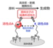 東京工業大学 物質理工学院 応用化学系 本倉健研究室 固体触媒 固定化触媒