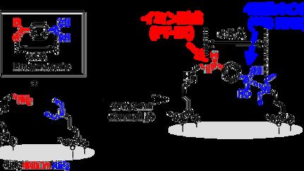 プローブ分子による活性点間距離の観測