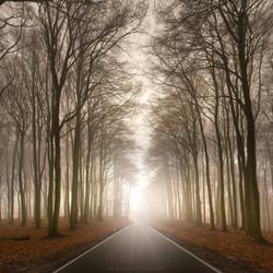 Road Sunrise