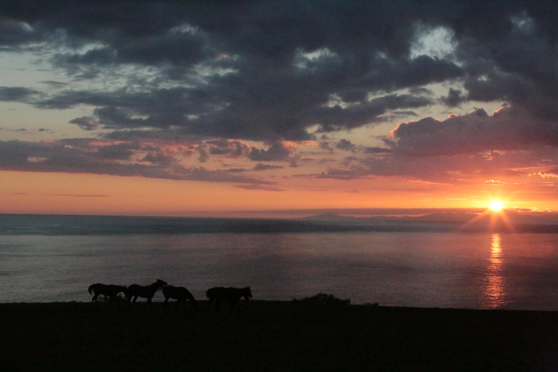 海と夕日と馬達と