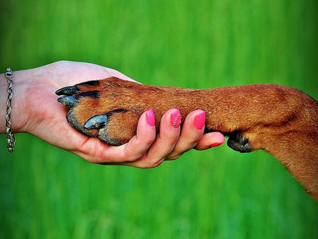 Cooperative Care for Canine Companions