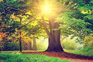 Puu oma voima.png