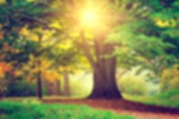 Beautiful park tree.jpg