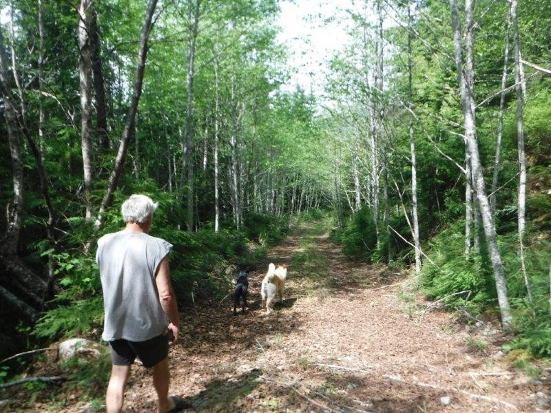 Buddy and dogs walking trail to Kalum River