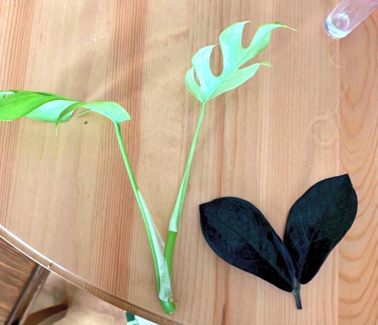 ייחורים ייחור צמחים לבית