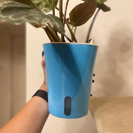 כלים חכמים לצמחים