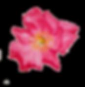 KakaoTalk_20191202_171948885.png