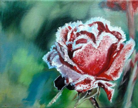 Frostbitten Rose