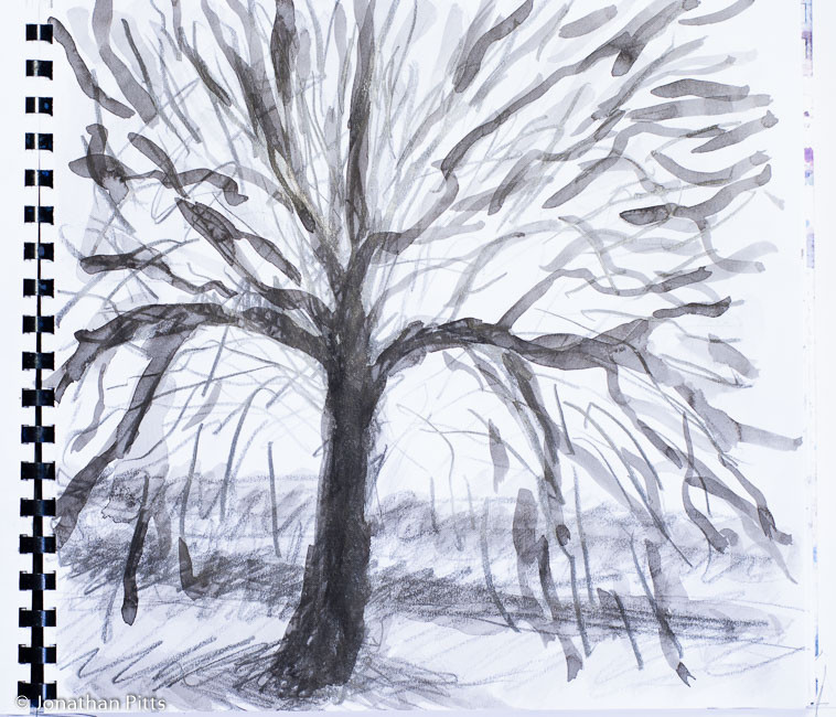 Jonathan Pitts ink sketch, Oak tree in Runnymede