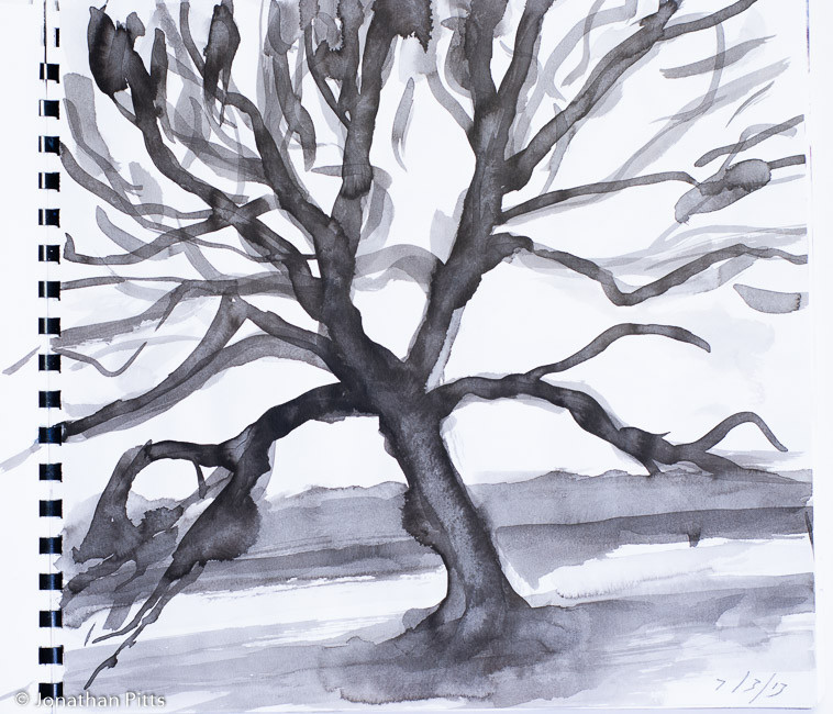 Jonathan Pitts ink sketch, Runnymede Oak tree