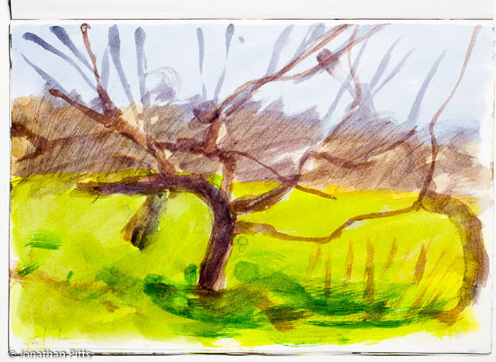Jonathan Pitts Sketch of an apple orchard in Evesham