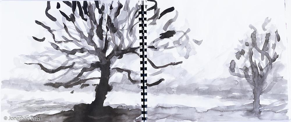 Jonathan Pitts ink sketch, Runnymede Oak tree