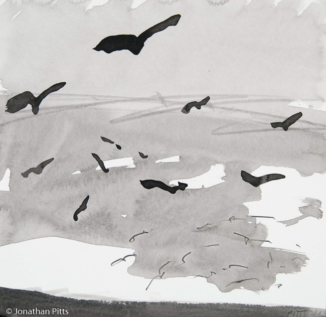Evening Gulls L35. Pencil on paper, 19 cm x 19 cm. By Jonathan Pitts, the Stour Gallery, the Cotswolds.