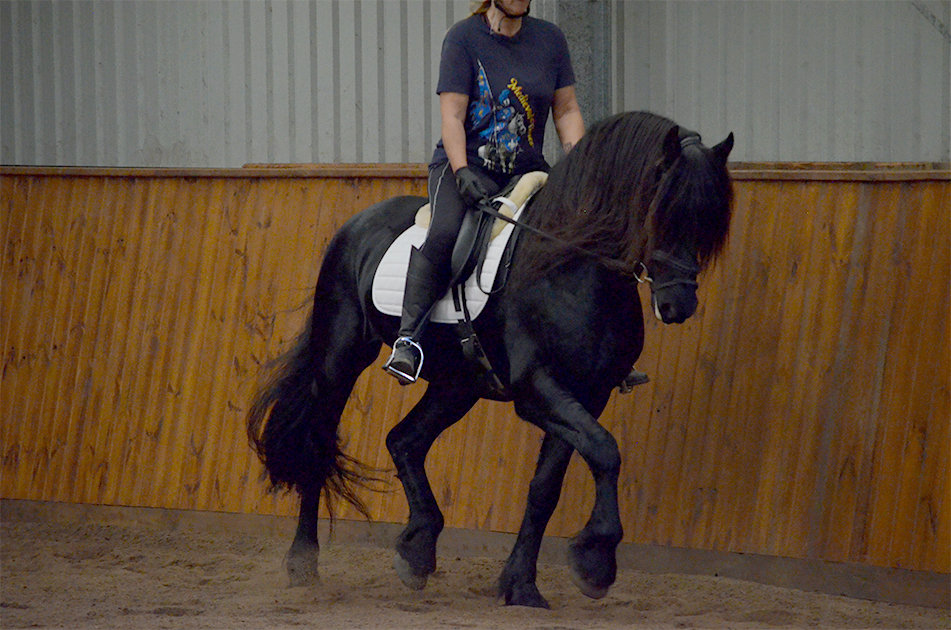 1hr Lesson + Yard Hire - PAID IN FULL