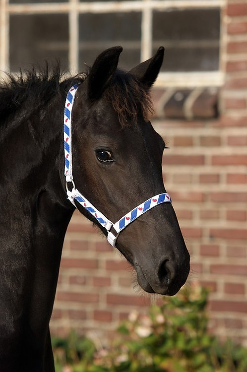 Head collar unlined foal Friesian