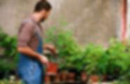 Pflanzenpflege, Raumbegrünung, Hydropflege, Büropflanzen