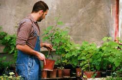 Vendeur jardinerie H/F - Stutzheim