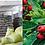 Thumbnail: Hawthorn Leaf Extract Vitexin