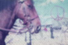 Kirsty Harris, police hhorse, greenham common, art, photography, carol, cnd, perimeter, horse