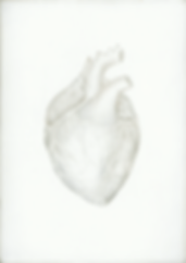 Kirsty Harris, art, artist, silverpoint, skull, anatomical drawing of a heart, london
