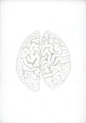 Kirsty Harris, art, artist, silverpoint, skull, anatomical drawing of a brain, london