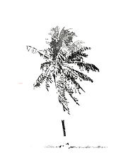 a charcoal drawing of a palm tree that was originally blasted on the paradisic Marshall Islands by the U.S. military in 1946.