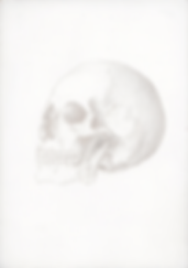 Kirsty Harris, art, artist, silverpoint, skull, anatomical drawing of a skull, london
