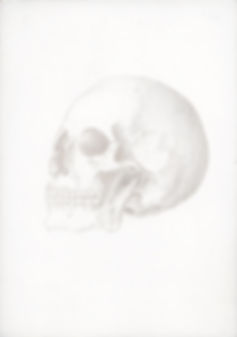 Kirsty Harris artist, kirsty harris art, miniature, skull, anatomical drawing, silverpoint drawing, miniature silverpoint drawing