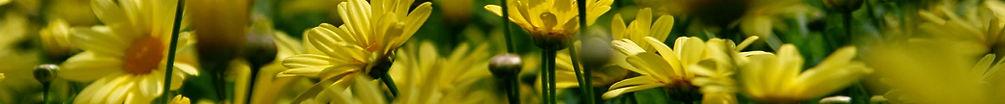 frauenbund_Blumen.jpg
