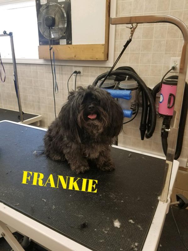 FRANKIEb_edited