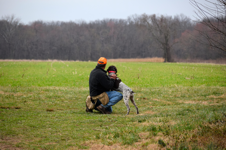 Hunting dog | United States | Shore Shot Kennel
