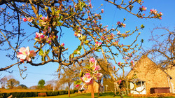 Springtime @ Appletree Hill