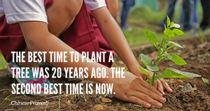 Final thoughts - The best time to plant a tree was 20 years ago. The second best time is now.