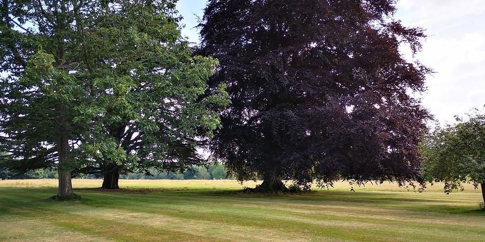 Faversham - New Moon Listening Tree Meditation and Sound Bath (1)