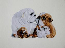 Bulldogs color