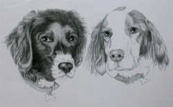 Dogs black and white drawing