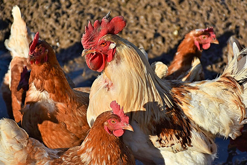 The King's Roost Large Chicken Share