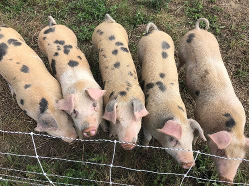 Half Pork Share