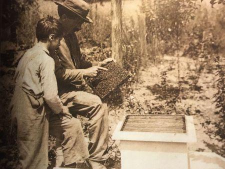 Pčelarstvo - Kako ?