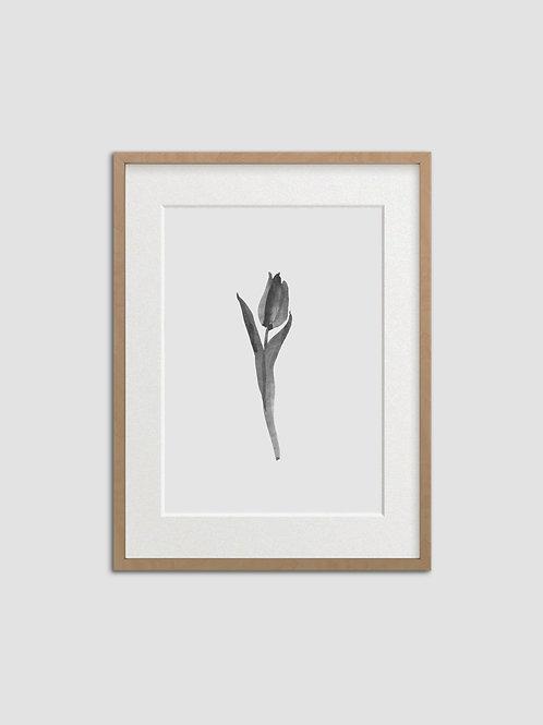 Tulip No. 8