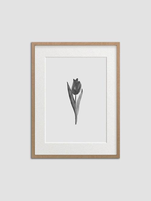 Tulip No. 7