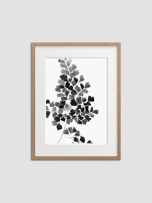 Black Fern
