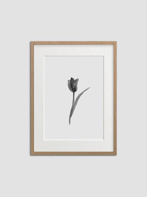 Tulip No. 5