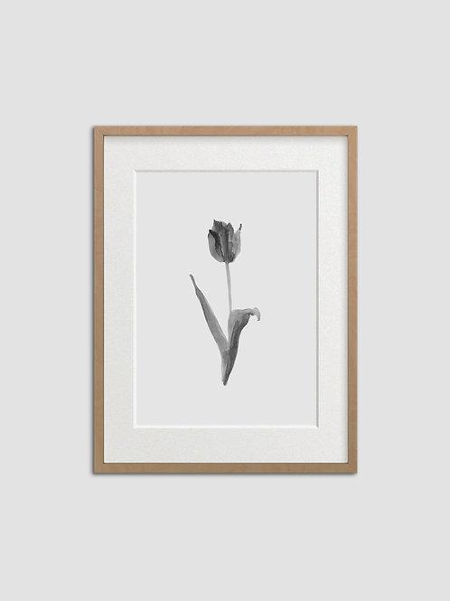 Tulip No. 4