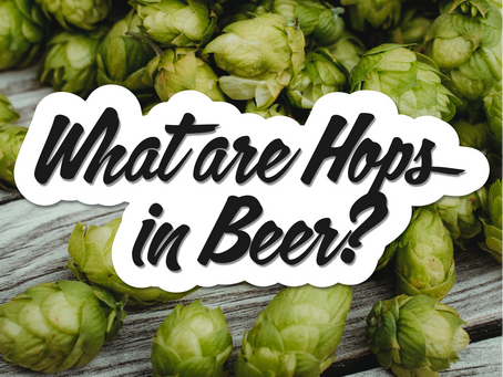 What are Hops in Beer? Origin & Use