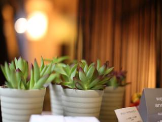 HOGUSの植物